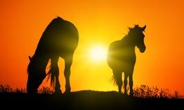 Άλογο στο ηλιοβασίλεμα Στοκ Φωτογραφία