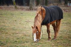 Άλογο στο λιβάδι το φθινόπωρο Στοκ Φωτογραφία