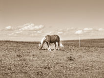 Άλογο στο λιβάδι (171) Στοκ Φωτογραφίες