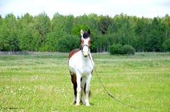 Άλογο στο λιβάδι Στοκ εικόνα με δικαίωμα ελεύθερης χρήσης