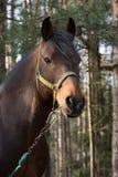 Άλογο στο ξύλο Στοκ φωτογραφία με δικαίωμα ελεύθερης χρήσης