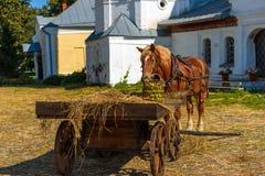 Άλογο στο λουρί με ένα καλοκαίρι κάρρων Στοκ Φωτογραφία