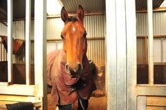 άλογο στο σταύλο Στοκ φωτογραφίες με δικαίωμα ελεύθερης χρήσης