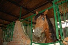 άλογο στο σταύλο Στοκ Φωτογραφίες