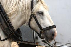 Άλογο σχεδίων στοκ εικόνα