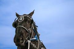 Άλογο σχεδίων Στοκ εικόνες με δικαίωμα ελεύθερης χρήσης