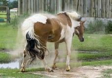 Άλογο τινάγματος Στοκ Εικόνα