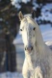 Άλογο το χειμώνα Στοκ εικόνες με δικαίωμα ελεύθερης χρήσης
