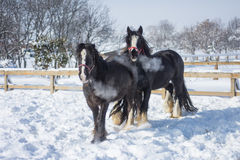 Άλογο το χειμώνα στοκ φωτογραφίες με δικαίωμα ελεύθερης χρήσης