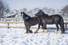 Άλογο το χειμώνα στοκ εικόνα με δικαίωμα ελεύθερης χρήσης