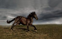 Άλογο τρεξίματος στοκ φωτογραφία με δικαίωμα ελεύθερης χρήσης