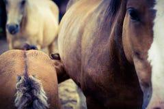 Άλογο φοράδων και μωρών στοκ εικόνες