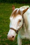 Άλογο χρωμάτων Στοκ Φωτογραφίες