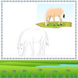 Άλογο χρωματισμού Στοκ εικόνες με δικαίωμα ελεύθερης χρήσης