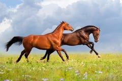 Άλογο δύο που οργανώνεται στη θερινή ημέρα Στοκ εικόνα με δικαίωμα ελεύθερης χρήσης