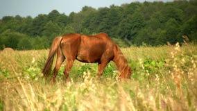 Άλογο φιλμ μικρού μήκους