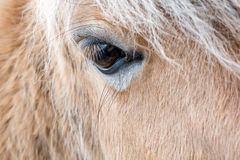 Άλογο Στοκ Εικόνες