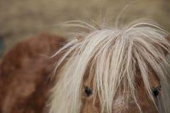 Άλογο Hipster με τον άγριο Μάιν Στοκ Εικόνες