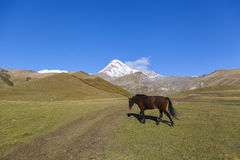 Άλογο Kazbegi Στοκ φωτογραφία με δικαίωμα ελεύθερης χρήσης