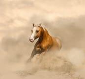 Άλογο Palomino στη σκόνη στοκ εικόνες με δικαίωμα ελεύθερης χρήσης