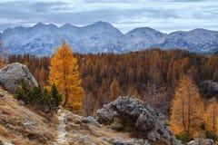 Άλπεις το φθινόπωρο Στοκ φωτογραφία με δικαίωμα ελεύθερης χρήσης