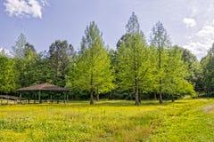 Άλσος και wildflowers κυπαρισσιών Στοκ Φωτογραφία
