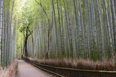 Άλσος μπαμπού, Arashiyama, Κιότο Στοκ Φωτογραφία