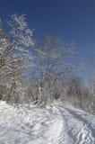 Άλσος στο χιονώδεις δασικούς μπλε ουρανό και τον ήλιο Στοκ Φωτογραφίες