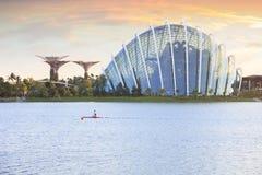 Άλσος της Σιγκαπούρης Supertree και κήπος σύννεφων Στοκ εικόνες με δικαίωμα ελεύθερης χρήσης