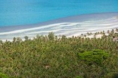 Άλσος φοινικών καρύδων στην παραλία, τοπ άποψη Στοκ Φωτογραφίες