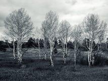 Άλσος Aspens στους λόφους Στοκ φωτογραφίες με δικαίωμα ελεύθερης χρήσης
