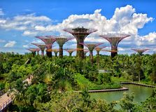 Άλσος Supertree, κήποι από τον κόλπο, Σιγκαπούρη Στοκ Φωτογραφίες