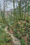 Άλσος yew-δέντρων Στοκ Εικόνες