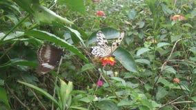 Άδυτο πεταλούδων Στοκ Εικόνα
