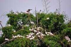 Άδυτο πουλιών Στοκ εικόνα με δικαίωμα ελεύθερης χρήσης