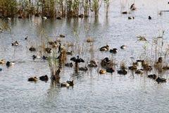 Άδυτο πουλιών Hula Στοκ φωτογραφία με δικαίωμα ελεύθερης χρήσης