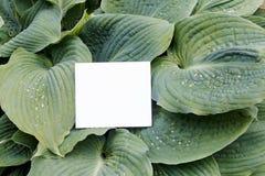Έγγραφο Ñ  ard για τα πράσινα φύλλα Στοκ Φωτογραφία