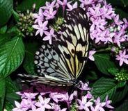έγγραφο ικτίνων πεταλούδ&om στοκ φωτογραφία με δικαίωμα ελεύθερης χρήσης