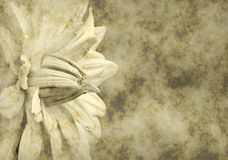 έγγραφο λουλουδιών αν&alpha Στοκ εικόνα με δικαίωμα ελεύθερης χρήσης