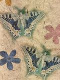 έγγραφο λουλουδιών πεταλούδων Στοκ εικόνες με δικαίωμα ελεύθερης χρήσης