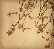 έγγραφο λουλουδιών Στοκ φωτογραφία με δικαίωμα ελεύθερης χρήσης