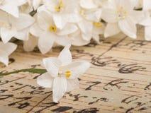 έγγραφο λουλουδιών Στοκ Φωτογραφίες