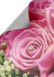 Έγγραφο μπουκλών με τα τριαντάφυλλα Στοκ εικόνα με δικαίωμα ελεύθερης χρήσης