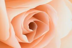 Έγγραφο λουλουδιών για το γαμήλιο σκηνικό Στοκ Εικόνα