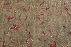Έγγραφο φιαγμένο από μπαμπού με την προσθήκη των τεμαχισμένων φύλλων, μέσα Στοκ Φωτογραφία