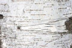 Έγγραφο φυσικού υποβάθρου σύστασης φλοιών σημύδων στενό Στοκ Εικόνες