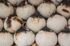 Έγκαυμα καρύδων, χυμός καρύδων Στοκ φωτογραφία με δικαίωμα ελεύθερης χρήσης