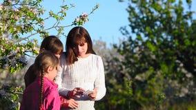 Έγκυες mom και κόρη που παίρνουν τις εικόνες μου με το τηλέφωνο στην ανθισμένη προσοχή πάρκων, μητέρων και παιδιών άνοιξη απόθεμα βίντεο