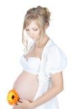 Έγκυος γυναίκα που κρατά την κοιλιά και το λουλούδι της Στοκ Εικόνες