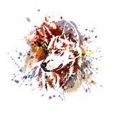 Έγχρωμη εικονογράφηση ενός κεφαλιού λύκων Στοκ Φωτογραφία